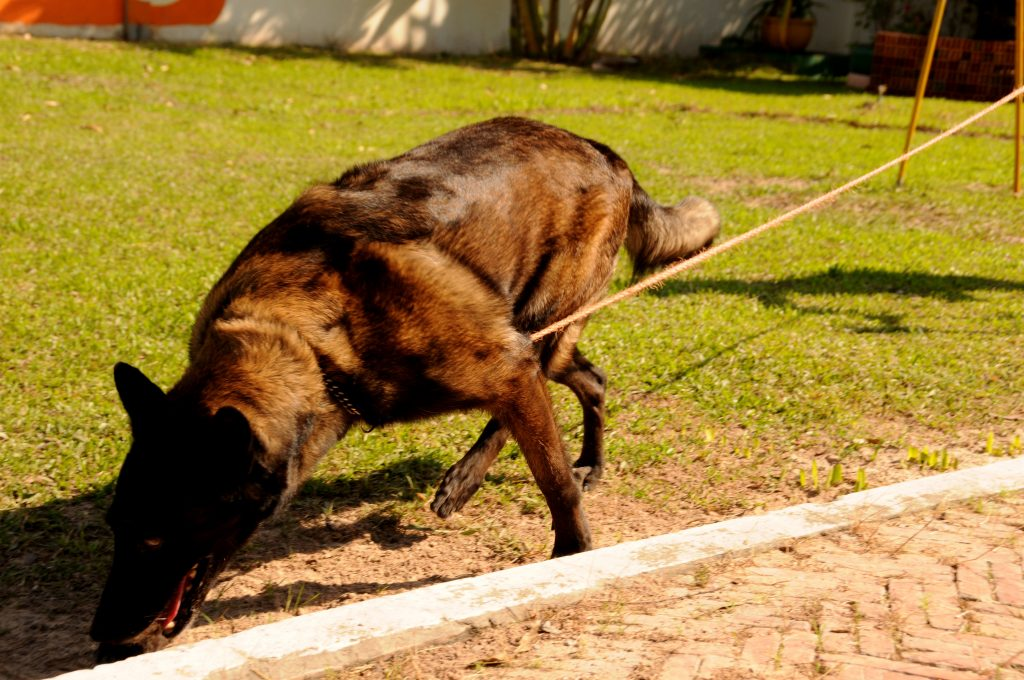 NPA landmine detection dog centre